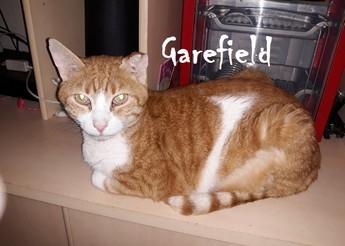 Garefield