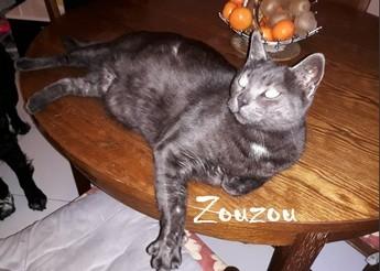 Zouzou