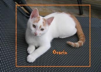Oracio (chaton de 6 mois)