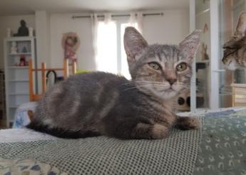 Meryl  adorable chaton