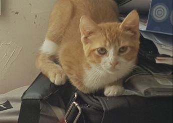 Nounours et Meryl : chatons frères et soeurs