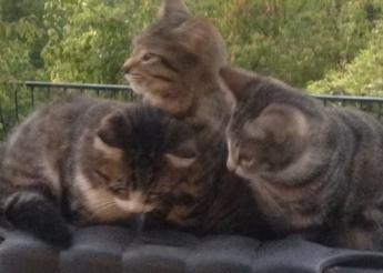 3 mignons chatons de 2 mois 1/2