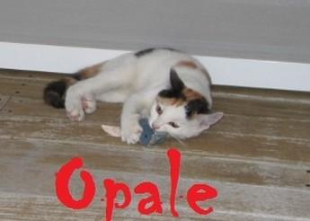 Opale, Ovni, Octave et Châtaigne