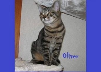 Oliver, chaton de 6 mois