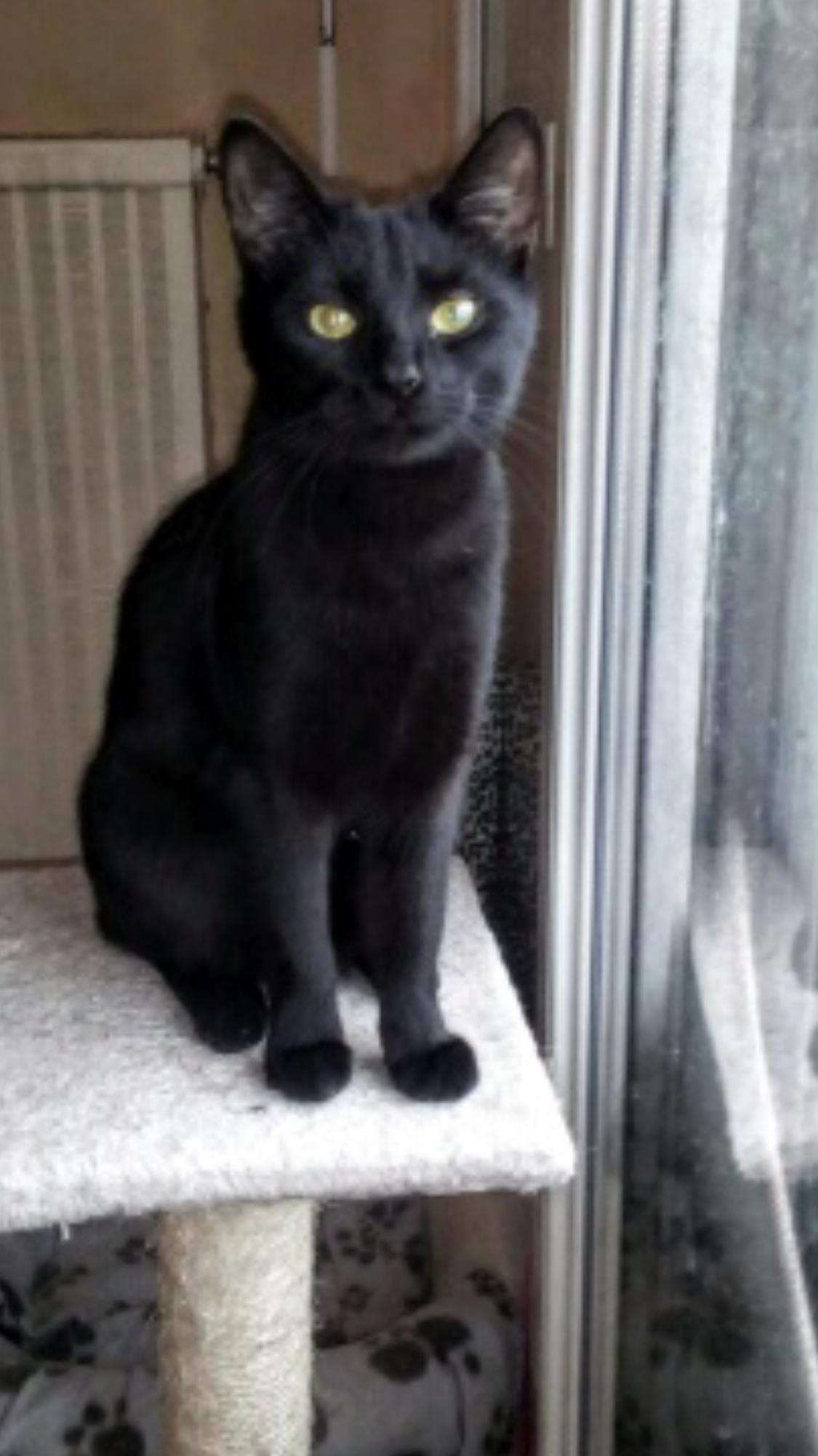Jade adorable panthère noire de 6 mois