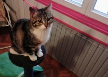 Roméo 1 an trouvé blessé à une patte soigné et prêt à l'adoption