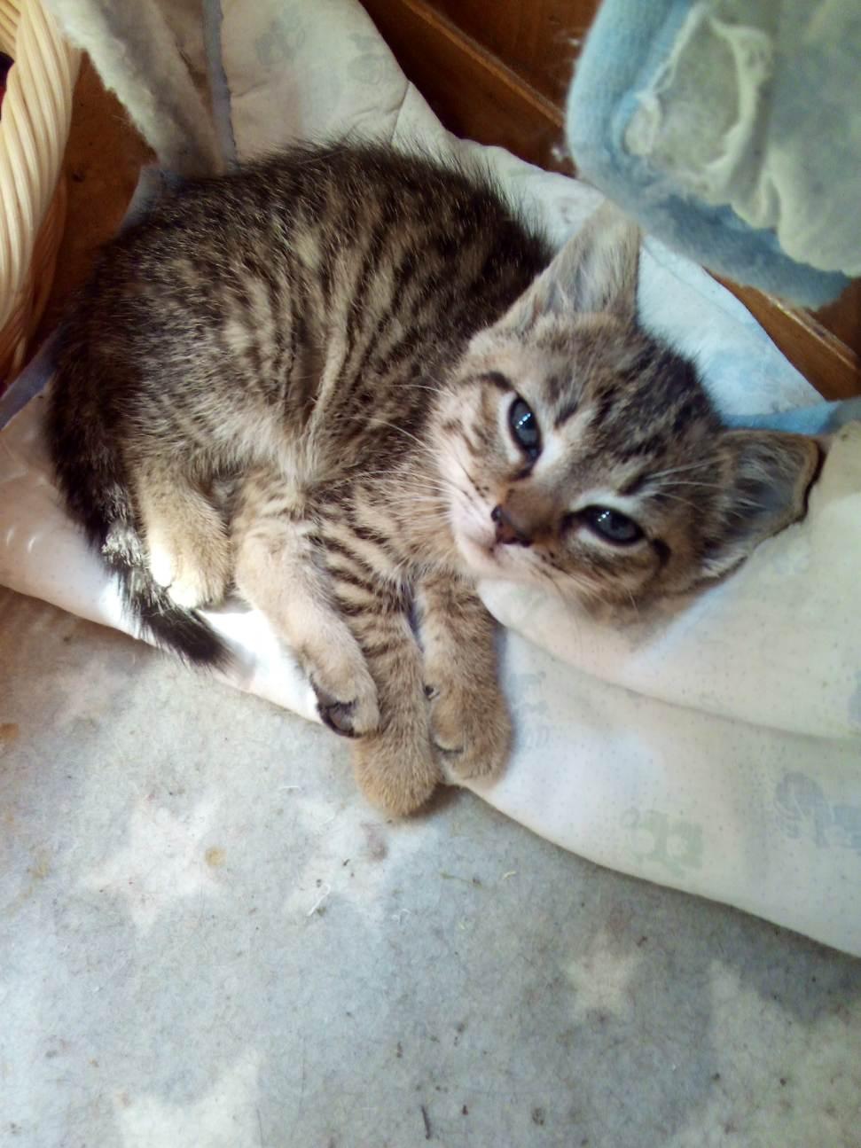 3 chatons à placer d'ici 1 mois (peuvent être réservés)