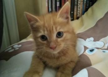 Willy Canaille et Nounours 3 chatons mâles  de 3 mois 1/2