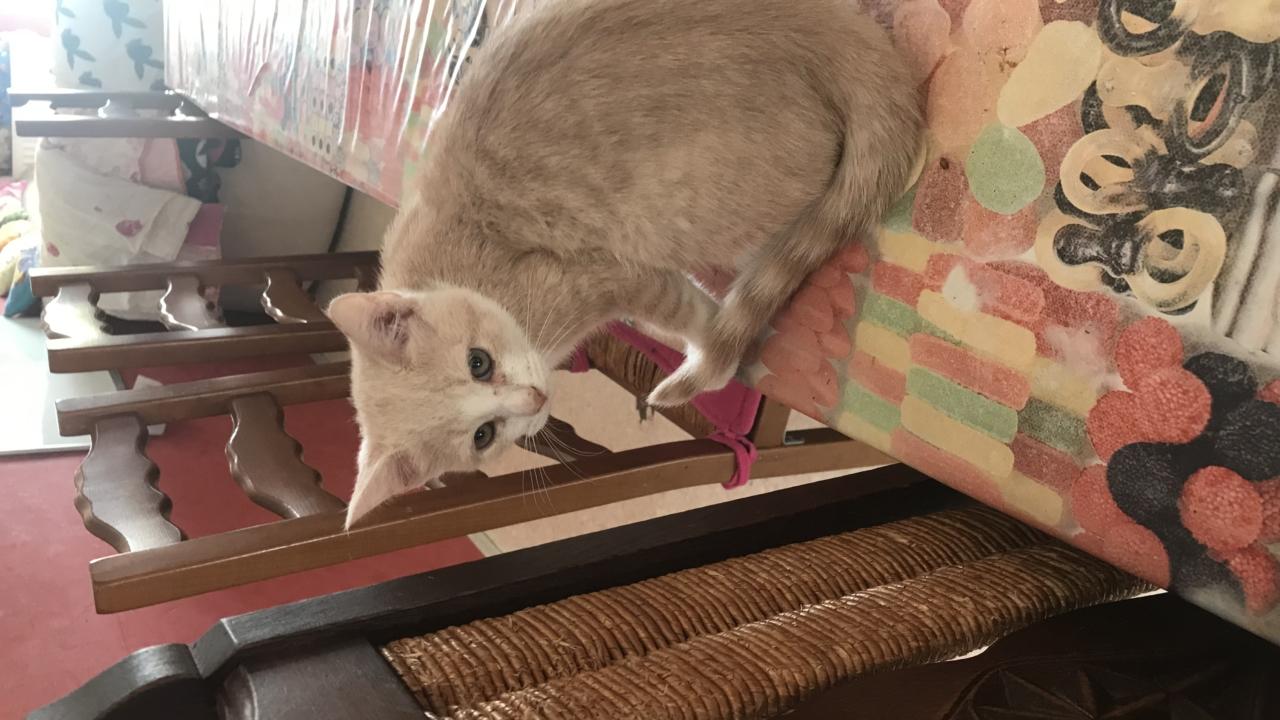 Cannelle, Tom et Jerry 3 mois à l'adoption CLIQUEZ SUR LES PHOTOS POUR LES VOIR MIEUX