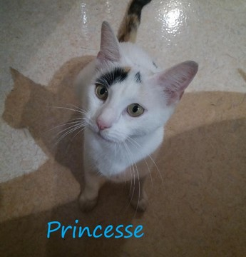 Princesse, minette de 4 ans