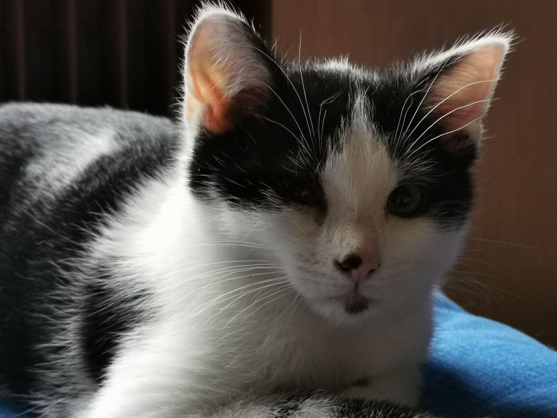 Filou chaton mâle env. 4 mois très gentil