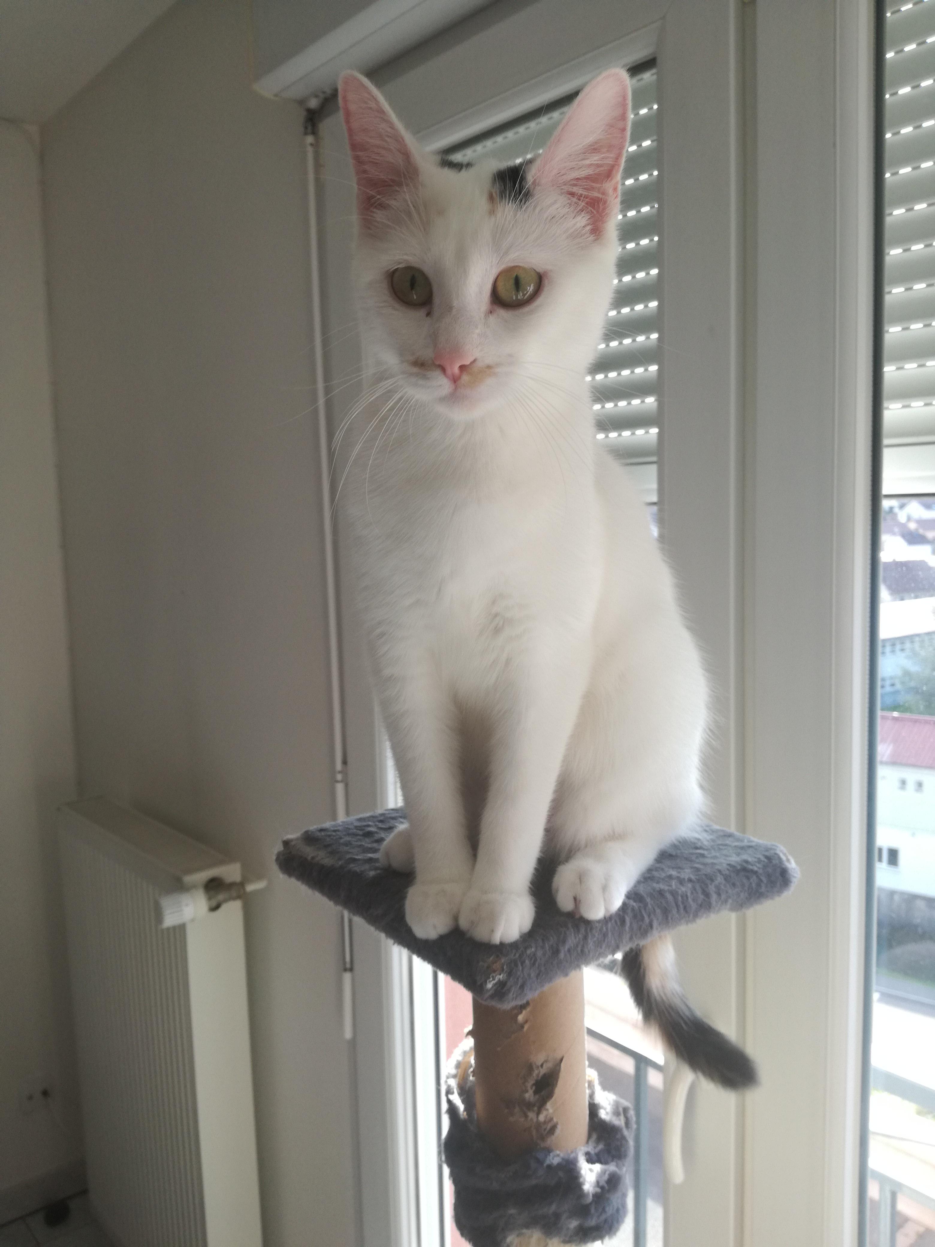 Lady  jolie minette blanche de 10 mois