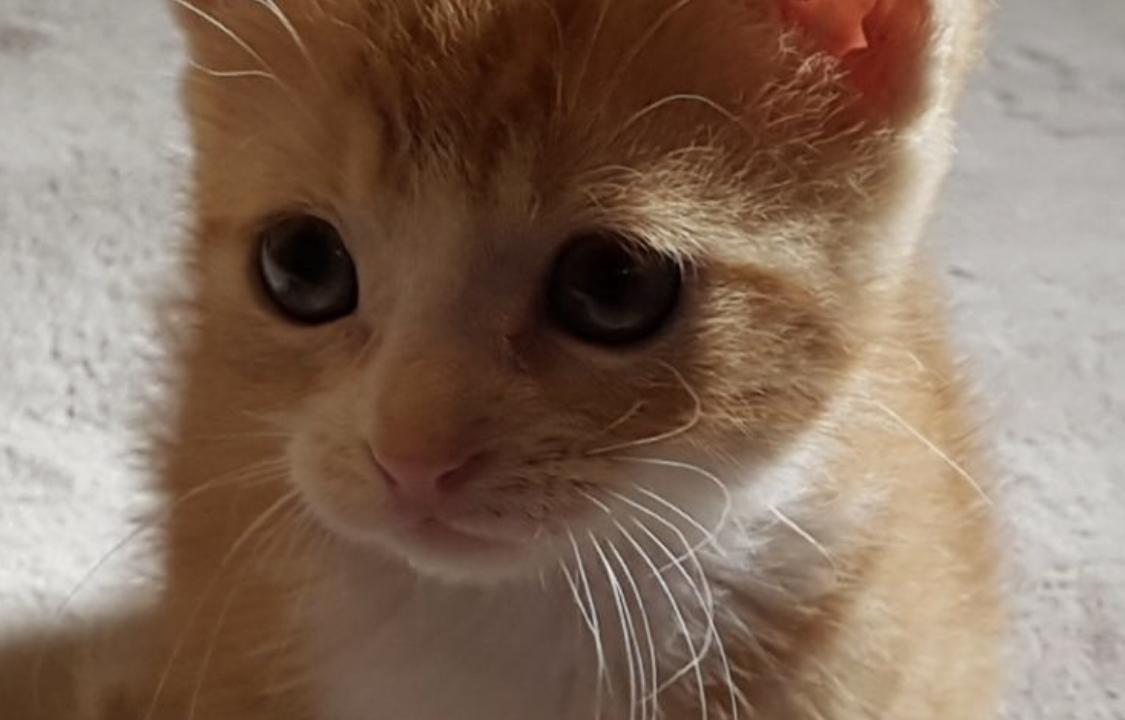 3 beaux chatons de 2 mois cherchent foyer