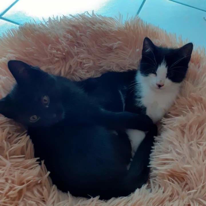 Lou et Marou 2 chatons de 2 mois (BB du confinement !!)
