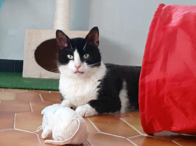 Fredon chat mâle 1 an noir et blanc