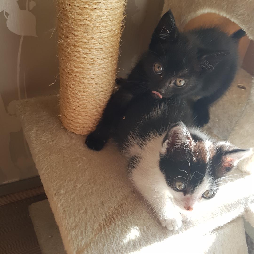 Luna et Iris 2 beaux bébés de 2 mois