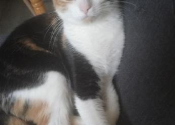 Coco et Chanel 2 et 3 ans jolies et gentilles minettes