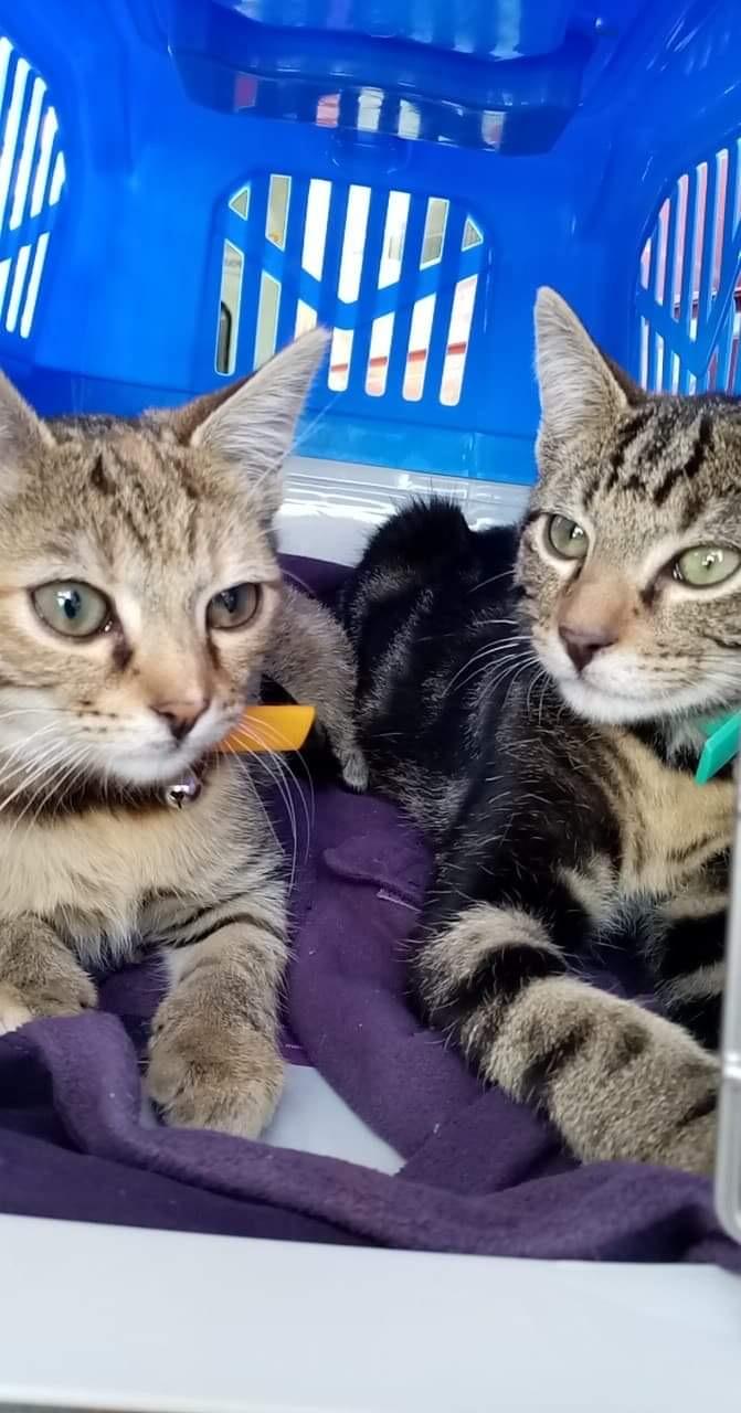 Pamina et Tamino 8 mois à adopter ensemble de préférence