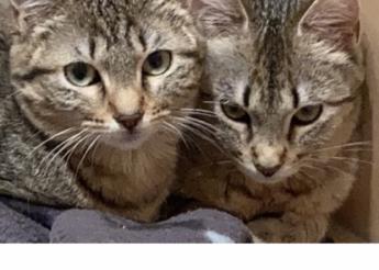Sushi et Sashimi 2 soeurs de 6 mois à adopter ensemble
