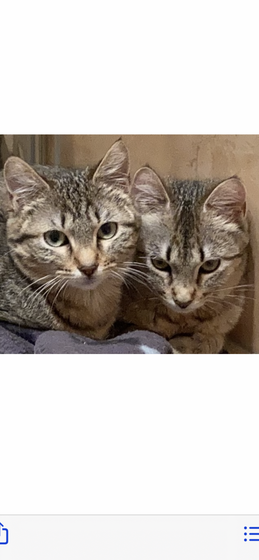 Sushi et Sashimi 2 soeurs de 8 mois à adopter ensemble