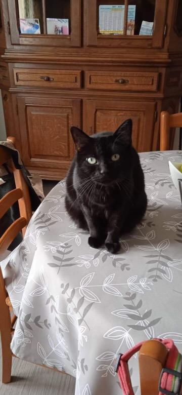 Mimi 3 ans dont la propriétaire ne peut plus s'occuper