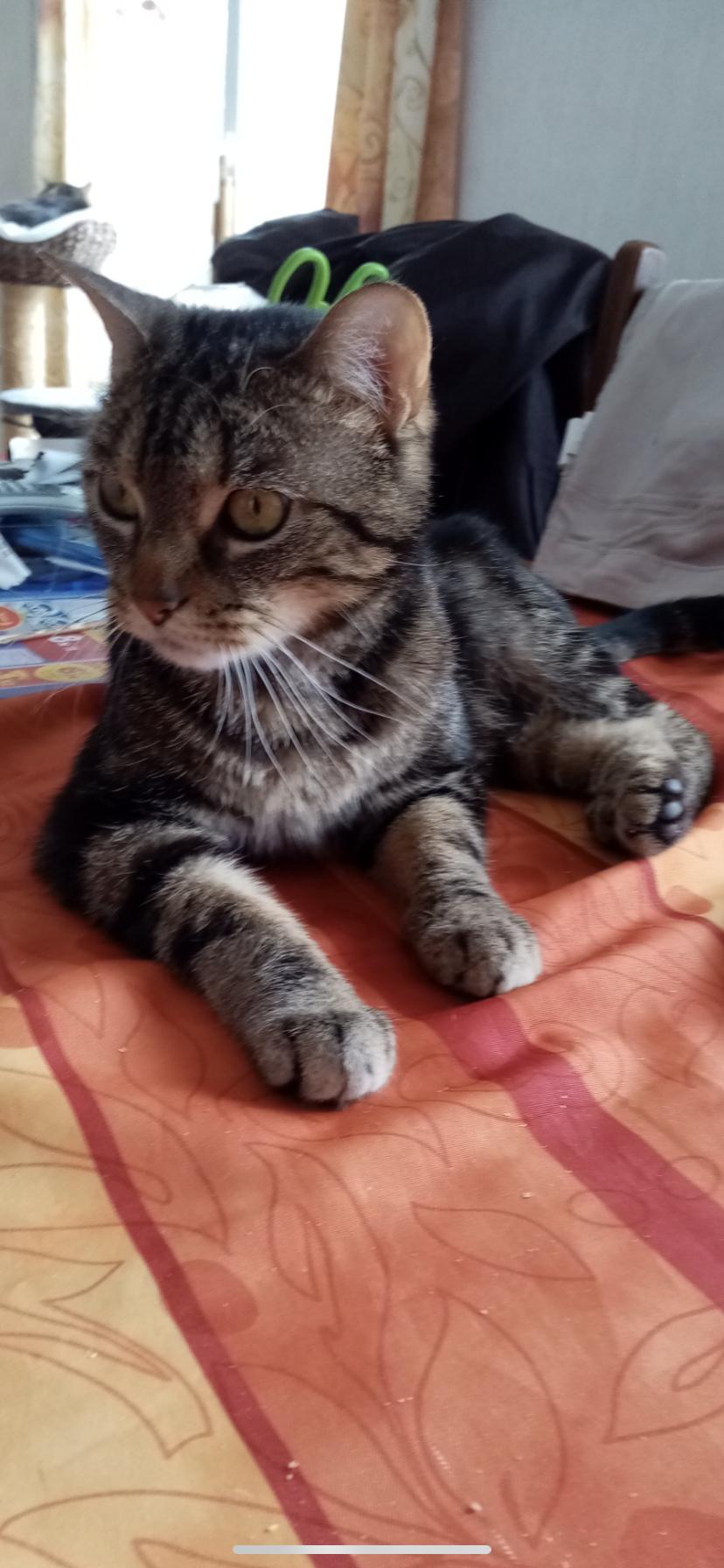 Lilou 3 ans très gentille et très calme cherche nouveau foyer cause maladie des maîtres