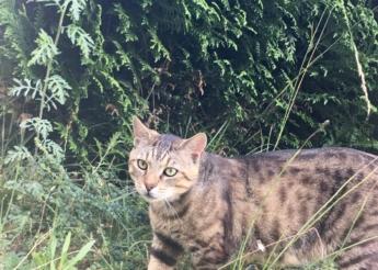 Tigrou 3 ans calme et gentil  vit sur une terrasse et aimerait un foyer